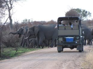 Safari and Tours